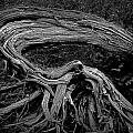 Roots Of A Fallen Tree By Wawa Ontario In Black And White by Randall Nyhof
