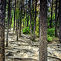 Roots Of Trees by Viktor Birkus