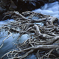 Roots Over Ozark Stream by Garry McMichael
