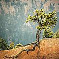 Roots Rock by Nancy Strahinic