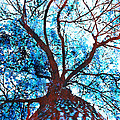 Roots To Branches II by Floyd Menezes