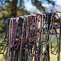 Rope Halters For Horses Lined by Jess McGlothlin Media