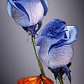Rosa Azul With Orange by Kirk Ellison