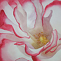 Rosa by Genevieve Davidson