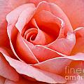 Rosa Summer Lady  by Lana Enderle