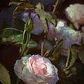 Rose 122 by Pamela Cooper