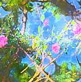 Rose 182 by Pamela Cooper