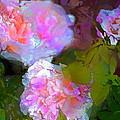 Rose 184 by Pamela Cooper