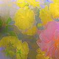 Rose 185 by Pamela Cooper