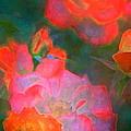 Rose 187 by Pamela Cooper