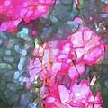Rose 188 by Pamela Cooper