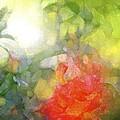 Rose 190 by Pamela Cooper
