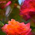 Rose 191 by Pamela Cooper