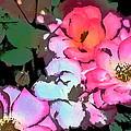 Rose 197 by Pamela Cooper
