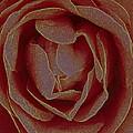 Rose 2 by Greg Thiemeyer