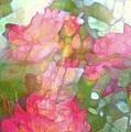 Rose 200 by Pamela Cooper