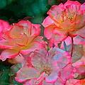 Rose 203 by Pamela Cooper