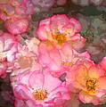 Rose 210 by Pamela Cooper