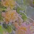 Rose 213 by Pamela Cooper