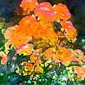 Rose 215 by Pamela Cooper