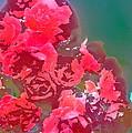 Rose 248 by Pamela Cooper