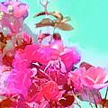 Rose 249 by Pamela Cooper
