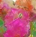 Rose 256 by Pamela Cooper