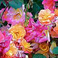 Rose 304 by Pamela Cooper