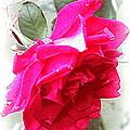 Rose - 4505-004 by Travis Truelove