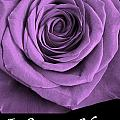Rose 5 I Love You by Matthew Howard