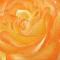 Rose by Ben and Raisa Gertsberg