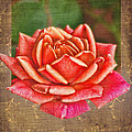 Rose Blank Greeting Card by Debbie Portwood