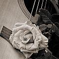 Rose Bloom Flower On Guitar In Sepia 3262.01 by M K Miller