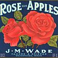 Rose Brad Apples Crate Label by Label Art