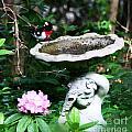 Rose Breasted Grosbeak by Jinx Farmer