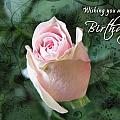 Rose Bud 3 by Helene U Taylor