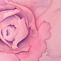 Rose Cabbage by Louise Riedell