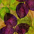 Rose Clippings Mural Wall by Claudia Ellis