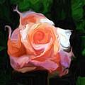 Rose Colored by Jim Buchanan