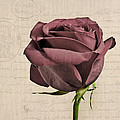 Rose En Variation - S02c3t3a by Variance Collections