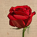 Rose En Variation - S2at03a by Variance Collections