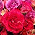 Rose Enhanced by Marian Palucci-Lonzetta