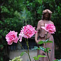 Rose Garden 3 by Richard Booth