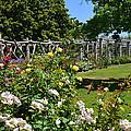 Rose Garden And Trellis by Lynn Bauer