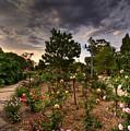 Rose Garden by Darren Burton