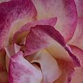Rose Garden by Edgar Laureano