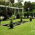 Rose Garden by Kathleen Struckle