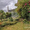 Rose Garden Near Cottage In England by Patricia Hofmeester