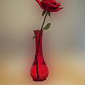 Rose In A Vase by Thomas Woolworth
