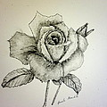 Rose In Monotone by Pamela  Meredith
